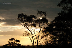At the top of Mountain View (loobyloo55) Tags: trees cloud sun clouds canon gold silhouettes australia newsouthwales 50mmlens canoneos400d