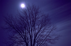 A Mid-Winter Night's Dream (Radical Retinoscopy) Tags: winter moon tree film silhouette night analog star kodak pennsylvania pa astrophotography lancaster astronomy nightsky tungsten lancastercounty portra lunar wintersky startrails astrophoto startrail portra100t nikoncoolscanv