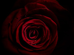 Significados ocultos: AMOR (_Zahira_) Tags: light red black flower macro luz water rose lafotodelasemana rojo agua darkness negro flor rosa olympus drop gotas gota oscuridad petalos e500 uro 35mmmacro zd35mm grops ltytrx5 ltytr1