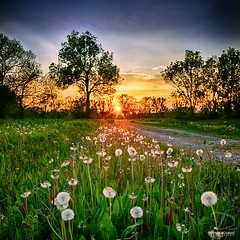Le chemin de pissenlit (DENISDROUAULT) Tags: france nature french champs ciel nuages campagne paysages hdr chemin pissenlit touraine jimages borderfx canoneos5dmarkiii denisdrouault