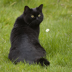Maia 8 (Bassman99) Tags: cats blackisle scottishwildlife gamebirds