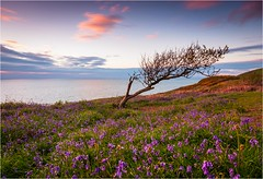 Bell View (Adam Evans (ffaffman)) Tags: sunset bluebells wales coast spring nikon ceredigion d300