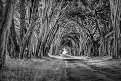 Perpetual Invitation (StefanB) Tags: california road light bw tree monochrome landscape outdoor pointreyes alameda geotag 2012 nationalseashore 1445mm em5 flvonmirikr