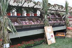 IMG_9695 (AtHandGuides.com) Tags: festival ma massachusetts harvest celebration cranberry cranberries mass bog wareham makepeace admakepeace