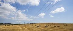 Blue, Bales and Wires (stevedewey2000) Tags: sigma2470 widescreen 2351 landscape landscapes dorset bales haybale rounds harvesting harvest cloudscape clouds orange blue