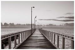 Timber jetty (pbaddz) Tags: bw water clouds sunrise dawn blackwhite jetty australia queensland moretonbay wellingtonpoint