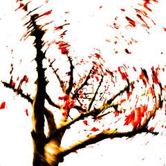 Red Berries II (wide-angle.de) Tags: treesii de germany digital y201602
