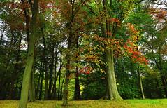 Bedford : Autumn leaves . . . (Clement Tang **) Tags: newyork bedford travel america usa autumn autumnleaves nature nationalgeographic handheldhdr concordians closetonature landscape treetrunks morning scenicsnotjustlandscapes