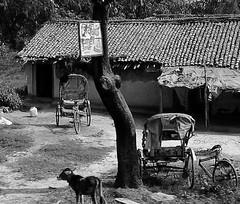 INDIEN , india, unterwegs nach Varanasi, 14271/7152 (roba66) Tags: blackwhite bw sw branco negro blackandwhite blancoenero blancoynegro monochrome byn bretoebranco einfarbig schwarzweis indien indiennord asien asia india inde northernindia urlaub reisen travel explore voyages visit tourism roba66 dorf village arm