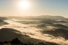 0207 (_Moliveira) Tags: winter fog mist misty foggy sunrise sunlight sun light haze green yellow d5200 nikon 35mm dx 18g mood moody