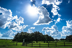 Incredible Sky (Sonia Argenio Photography) Tags: bysoniaa farm flickr flickrsoniaargenio flickrsoniasgallery green ocalafl ocalafarm soniaargenio trees white black blue bluesky clouds fence fencing field florida grass liveoaks oaktrees outdoor pasture sky sunlight threeboardfence