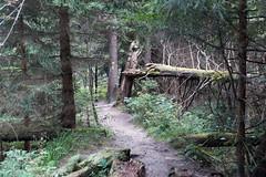 Von Willingen nach Usseln (dieter.steffmann) Tags: rothaargebirge hochsauerland rothaarsteig uplandsteig medebach kstelberg
