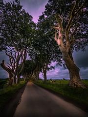 P7090020_B (Michael B.O.) Tags: irland landschaft landscape hedges