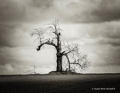 Sorti de terre (patoche21) Tags: bourgogne bze ctedor nb nature noiretblanc arbre tree champ field bw blackandwhite burgundy patrickbouchenard cielnuageux cloudysky