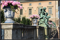 Flowers at the Castle (mmoborg) Tags: mmoborg city sweden sverige stockholm b