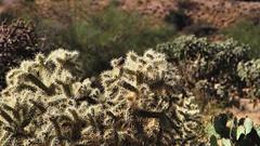 DOF in the desert (edk7) Tags: olympuspenliteepl5 edk7 2013 usa arizona sahuarita arizonaaerospacefoundation titanmissilemuseum unitedstatesairforce usairforce usaf airforcefacilitymissilesite8 titaniiicbmsite5717 complex5717 active196382 nationalhistoriclandmark cactus landscape nature desert
