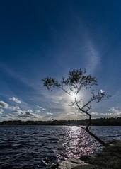 Swedish Nature [explored] (Mange J) Tags: fs160911 fryken k3ii magnusjakobsson pentax sigma1020 sverige sweden värmland blue clear evening fotosondag lake natur nature pentaxart silhouette sky summer sun sunshine tree water värmlandslän se