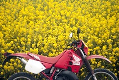 L1008459c (haru__q) Tags: leica m8 leitz summicron field mustard  honda crm250r motorcycle 2st