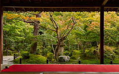 Looking out (Tim Ravenscroft) Tags: enkoji temple garden foliage autumn fall kyoto japan