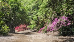 Koko Crater Botanical Garden (Oliver Leveritt) Tags: nikond7100 afsdxvrnikkor18200mmf3556gifed oliverleverittphotography hawaii oahu kokocraterbotanicalgarden nature trees flowers bougainvillea scenery