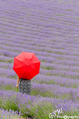 Red in a Sea of Lavender (Gavmonster) Tags: nature naturalworld countryside country wild england britain uk outdoor nikon d7000 nikond7000 gswphotography westsussex sussex red lavender lilac lordington black umbrella spots summer southdowns arm dress field mailettelavender purple woman
