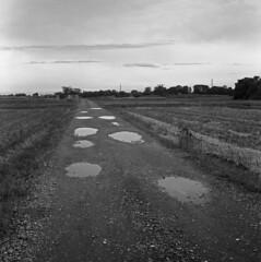 Farm road with puddles (odeleapple) Tags: mamiya c330 mamiyasekor 65mm neopan100acros film bw farm road puddle