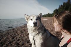 My Bestie (jayjay.and.the.wolf) Tags: dog pet malamute alaskanmalamute lakesuperior northshore