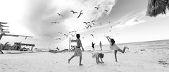 Feeding Birds at the Beach (Luis Montemayor) Tags: holbox mexico beach playa kids nios fun diversion birds aves sky clouds nubes cielo sand arena