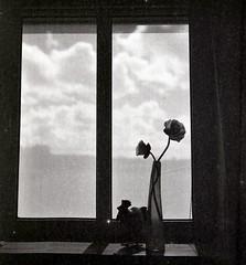 artifical flowers (sowhat63) Tags: hattenstedt marion hinrichsen der grne weg patchwork halligblick