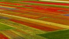 piana1 (Fr@tes) Tags: castellucciodinorcia castelluccio colori colors explore canon eos fioritura