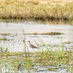 #_  #goodevening # #birds #bird #instabird #  #_ #_ #Waterbird #Waterbirds  #waterfowl #instabirds #insyaanimals #instaanimal #animal #animals #hdr #sonyalpha  #saudiarabia  # # # # # #s (photography AbdullahAlSaeed) Tags: goodevening birds instabirds    animal hdr      waterfowl waterbird  saudiarabia instaanimal  instabird bird sonyalpha sonya animals  insyaanimals waterbirds