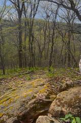Bluff (wackybadger) Tags: mvc rock wisconsinstatenaturalarea nikon eagleeyesna forest wisconsin nikond7000 tree vernoncounty nikon1855mmf3556gafsvr sna675 mississippivallyconservancy