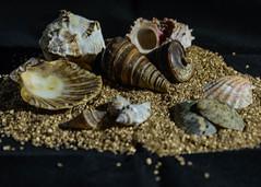 DSC_0415-9.jpg (TinaKav) Tags: seashells workshop sand nikon 2016 nikond7100 shells