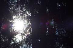 Lensflare (TheoCanon650D) Tags: wald wiese sky tree moos sonne sun spirale quelle nagel dry handschuh kuh igel tiere