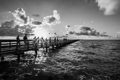 Sunrise Fishermen (Daniel Ray) Tags: animal bird galveston seabrook bay gully park pine sunrise