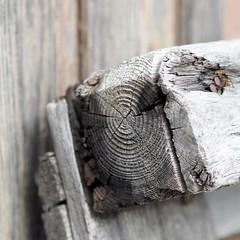 - ausgediente Palette - (HORB-52) Tags: forêtnoire blackforest schwarzwald berndsontheimer bokeh bokeh暈けぼボケ schärfentiefe