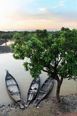 The beauty of ratargul (ainuLIslam) Tags: ratargul bangladesh bangla view skyview boat water waterbody nature tree green river sky skycloud bluesky cloud cloudy majestic fantastic amazing floating cloudporn sunray sunset natural imagination