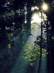 Wk 42 - Natural Light (fawlty128) Tags: light rays lightrays trees leaves woods forest