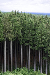 those trees (cosmoflash) Tags: woods wald forest bume baum tree bayern bavaria stamm