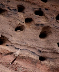 Sand Martins (mlogan1990) Tags: lake district st bees coast water sea beach sand martins birds nesting young caves nests flying feeding waiting food