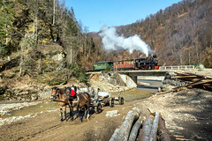 River Crossing (Kingmoor Klickr) Tags: horse cart workinghorse novat delta industrial narrowgauge railway reghin 764408 novatdelta romania transylvania maramures