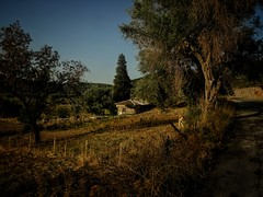 A little farm...!early morning (panoskaralis) Tags: farm nature tree trees olivetrees green outdoor landscape oldbuildings buildings stonehouses pine lesbos lesvosisland lesvos mytilene island greece greek hellas hellenic aegean aegeansea