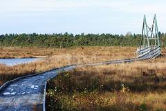 Myrbro (Bettysbilder) Tags: bog mosse myr natur nature outdoors utomhus naturreservat spng bro bridge