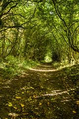 Woodland Walk (THE NUTTY PHOTOGRAPHER) Tags: track woodland