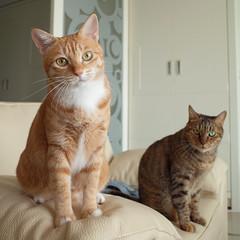 R0091072S (lazybonessss) Tags: cat momo nana kitten2 kitten ricohgrii ricoh