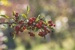Autumn bokeh (Inka56) Tags: hbw