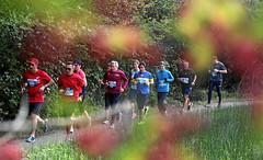 Hallwilerseelauf: Farbtuepfer saeumen den Halbmarathon