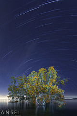Under the Waka Sky (draken413o) Tags: tree night photography star landscapes singapore earth trails astro mangrove spinning rotation pasir ris waterscapes