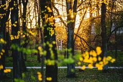 Sunset | uolynas, Kaunas #125/365 (A. Aleksandraviius) Tags: park trees sunset sun oneaday canon evening photoaday 365 70200 pictureaday markiii project365 365days 2013 125365 uolynas canoneos5dmarkiii 3652013
