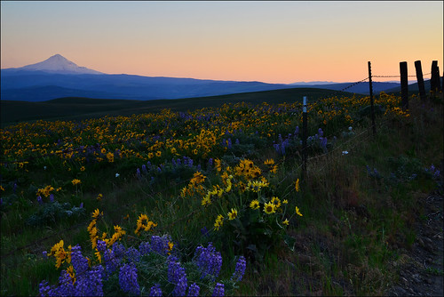 The Dalles Hills, Columbia River Gorge, Washington State